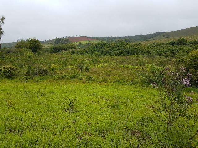 193B/Ótima fazenda de 70 ha bem localizada com ótima altitude e topografia - Foto 12
