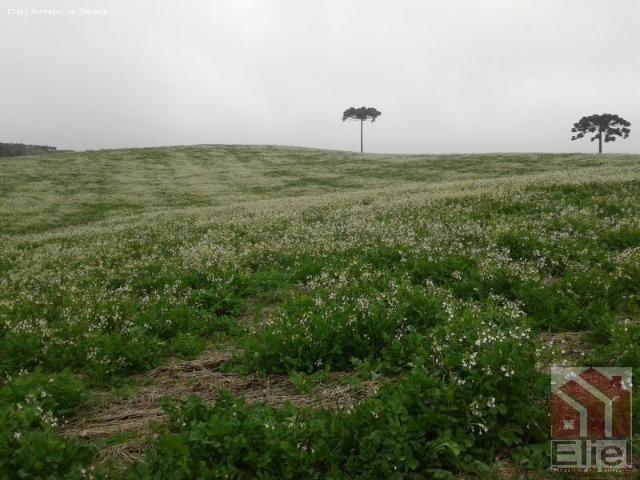 Fazenda Produtiva, Topografia Mecanizada, Propriedade Lindíssima - Foto 15
