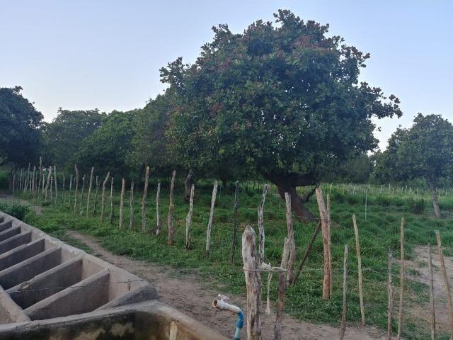 Granja com 8,8 há, duas casas, 2 poços, muito pasto, perto da reta tabajara - Foto 9