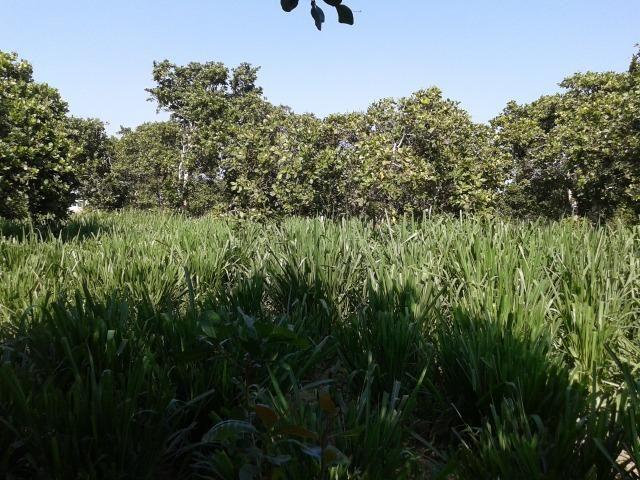 Granja com 8,8 há, duas casas, 2 poços, muito pasto, perto da reta tabajara - Foto 15