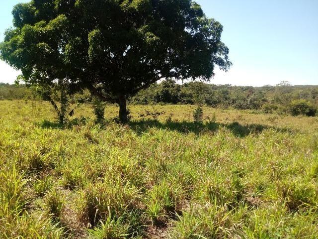 Chácara de 39 hectares em Acorizal !