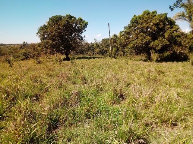 Chácara de 39 hectares em Acorizal ! - Foto 13