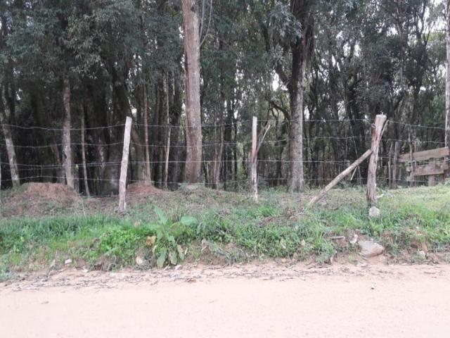 Chácara à venda em Areia branca dos nogueira, Mandirituba cod:CH00013 - Foto 5