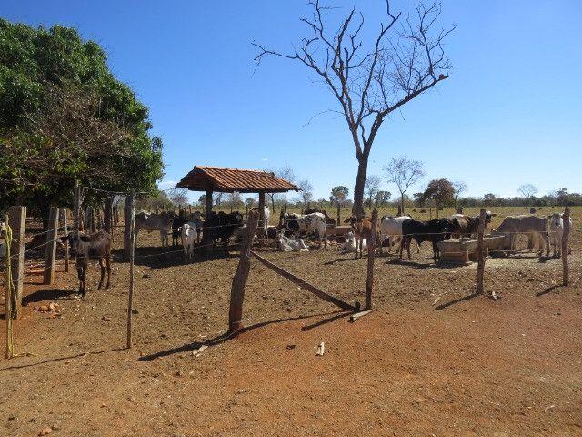 Fazenda em Corinto com área de 100 há, sede boa, curral, 70% formada - Foto 6
