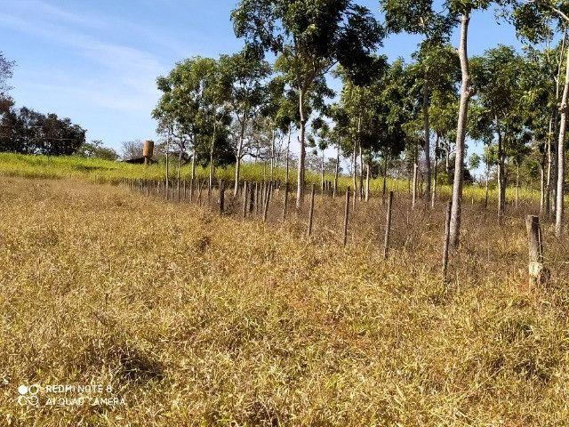 Fazenda 39 hectares - Foto 6