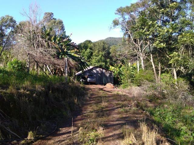 Chácara em Morro Reuter com 2 casas, pomar, mata, araucárias - Foto 4