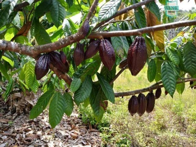 Maraú. Fazenda de 710 Hectares com diversas atividades de produção e rica em água - Foto 10