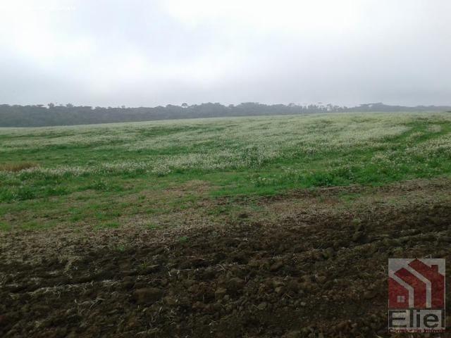 Fazenda Produtiva, Topografia Mecanizada, Propriedade Lindíssima - Foto 12