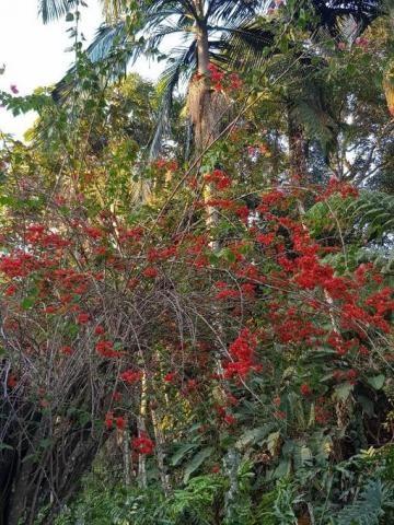 Chácara à venda em Condomínio iolanda, Taboão da serra cod:60343 - Foto 5