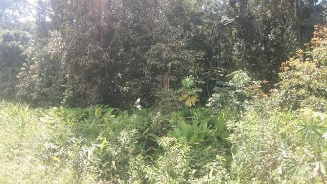 Bom terreno de 12.80 x 24 total 307,20 m2 em itapoá na área retro portuária, aproximadamen - Foto 4
