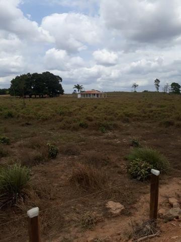 Vendo fazenda com 315 Hectares de terra!! - Foto 4