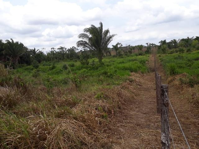 Vendo fazenda com 315 Hectares de terra!! - Foto 6