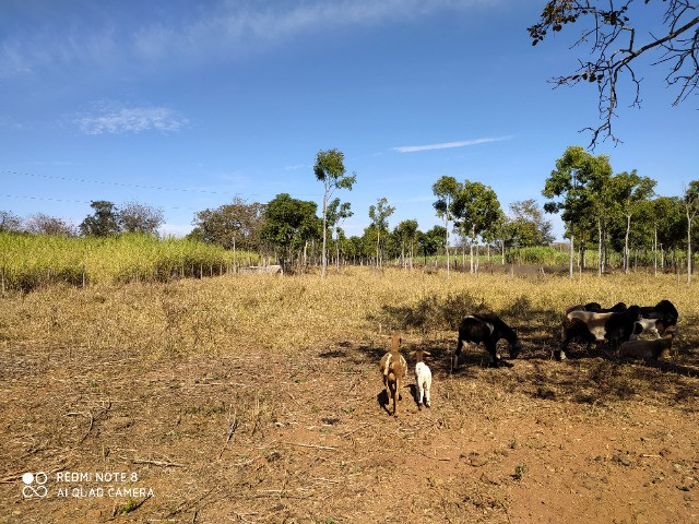 Fazenda 39 hectares - Foto 13
