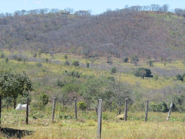 Fazenda em Augusto de Lima com área de 350 há, toda formada - Foto 3