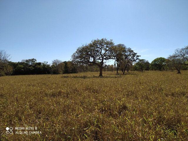 Fazenda 39 hectares - Foto 7