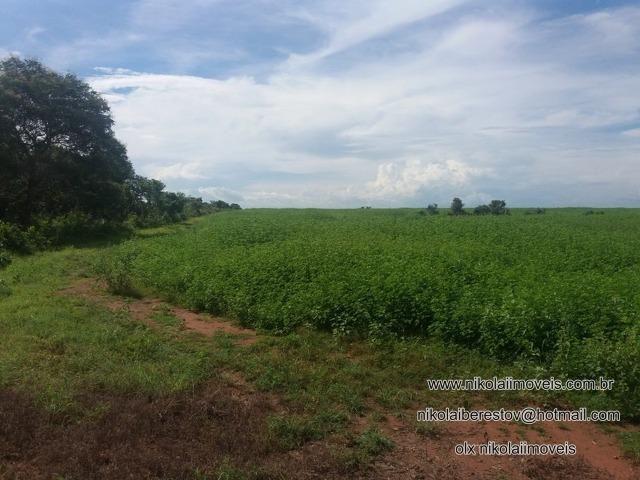 Fazenda arrenda pra soja plantando nordeste mt nikolaiimoveis
