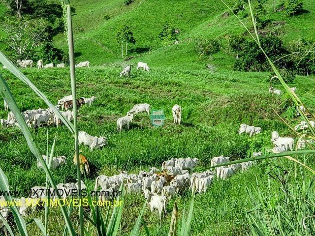 Itaju do Colônia. Linda Fazenda pecuária de 375 Hectares - Foto 2