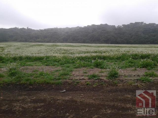 Fazenda Produtiva, Topografia Mecanizada, Propriedade Lindíssima - Foto 14