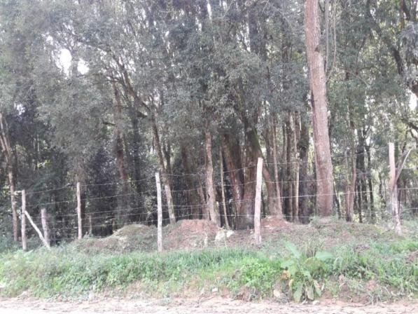 Chácara à venda em Areia branca dos nogueira, Mandirituba cod:CH00013 - Foto 4