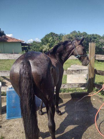 Égua preta - Foto 2