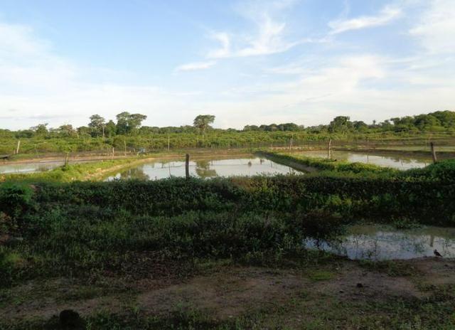 Ótima Fazenda a 50km de Cuiabá com 660ha - Foto 4