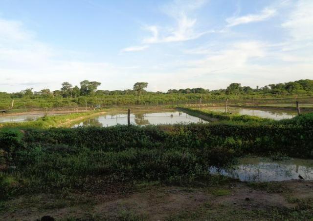 Ótima Fazenda a 50km de Cuiabá com 660ha - Foto 6