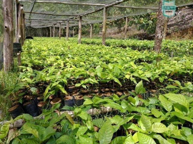 Maraú. Fazenda de 710 Hectares com diversas atividades de produção e rica em água - Foto 9