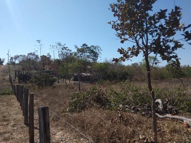 Chácara km 22 estrada da guia - Foto 10
