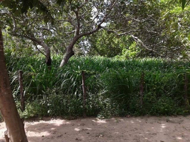 Granja com 8,8 há, duas casas, 2 poços, muito pasto, perto da reta tabajara - Foto 12