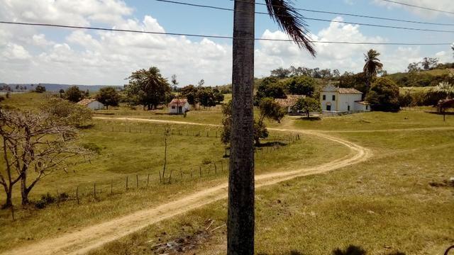 Fazenda 94,5 Ha. Pilar - Foto 2