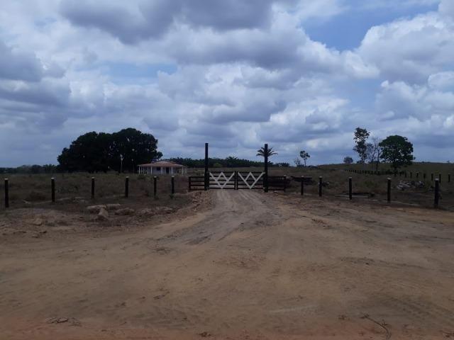 Vendo fazenda com 315 Hectares de terra!! - Foto 11