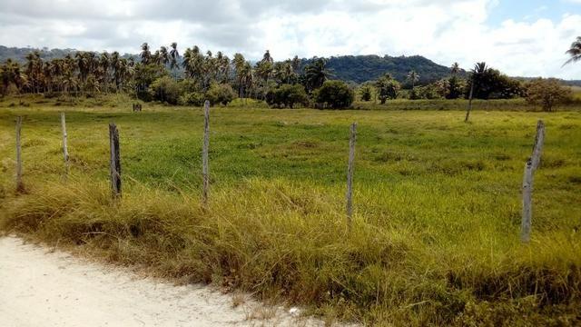 Fazenda 94,5 Ha. Pilar - Foto 3