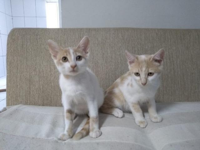 Urgente!! doa-se gatos de 3meses