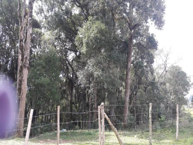 Chácara à venda em Areia branca dos nogueira, Mandirituba cod:CH00013 - Foto 2