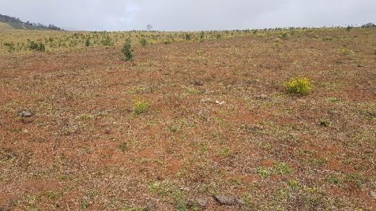 Itapetininga Região Fazenda 100 Alqueires - Foto 12