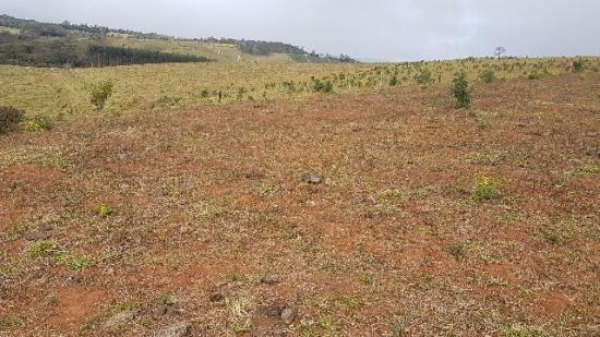 Itapetininga Região Fazenda 100 Alqueires - Foto 13