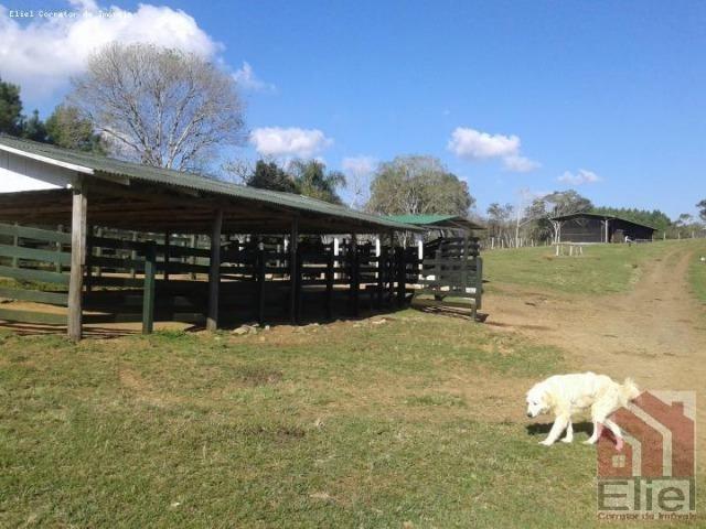Fazenda Linda, Ideal Até para se Montar um Hotel Fazenda - Foto 11