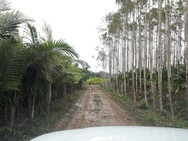 Fazenda Plana em Itapoá, Criação de Gado ou Plantio, Aceita Parte em Permuta - Foto 16
