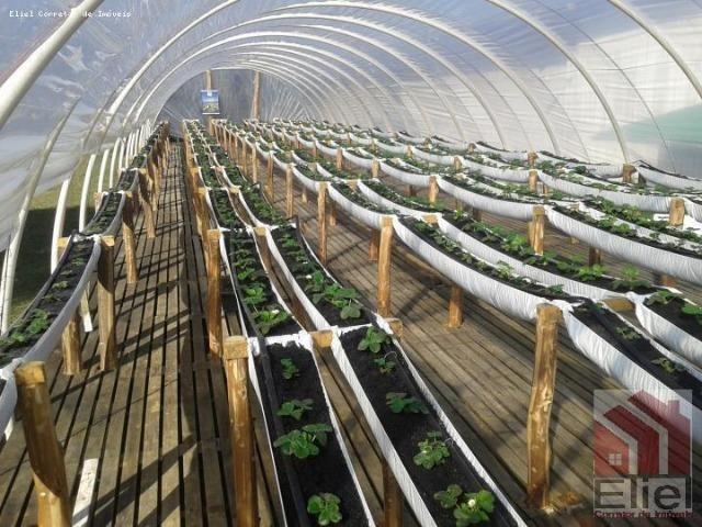 Fazenda Linda, Ideal Até para se Montar um Hotel Fazenda - Foto 10