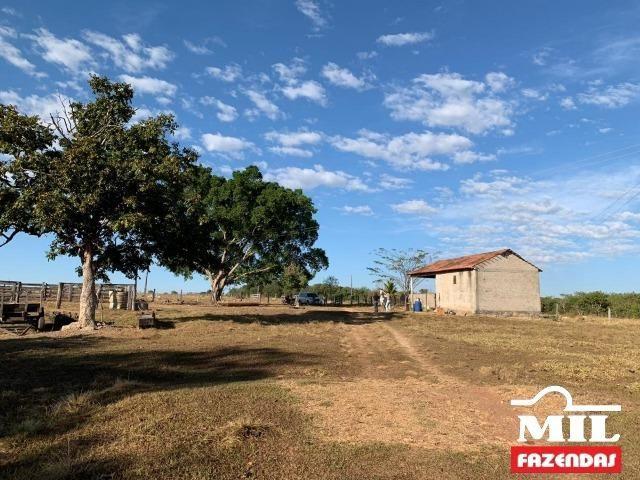 4 km de margens do Rio Araguaia. Fazenda 96 alqueires 464.64 Hectares - Aragarças-GO - Foto 10
