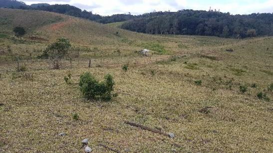 Itapetininga Região Fazenda 100 Alqueires - Foto 16