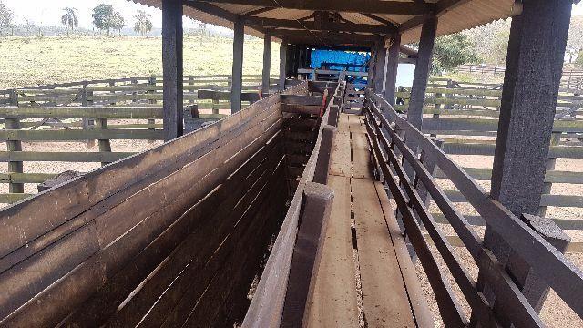 Itapetininga Região Fazenda 100 Alqueires - Foto 9