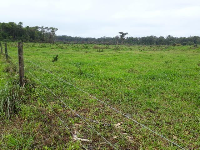 Fazenda Plana em Itapoá, Criação de Gado ou Plantio, Aceita Parte em Permuta - Foto 17