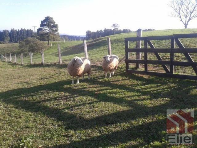 Fazenda Linda, Ideal Até para se Montar um Hotel Fazenda - Foto 13