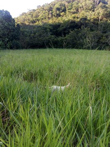 Sitio,granja de 11 hectare