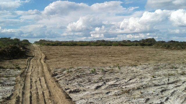 Fazenda em Pilão Arcado - BA - Foto 6