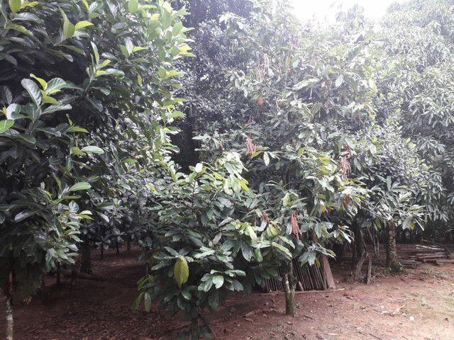 Vendo terreno ou troco por casa em Macapá  - Foto 4