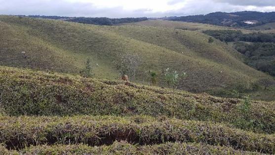 Itapetininga Região Fazenda 100 Alqueires - Foto 17