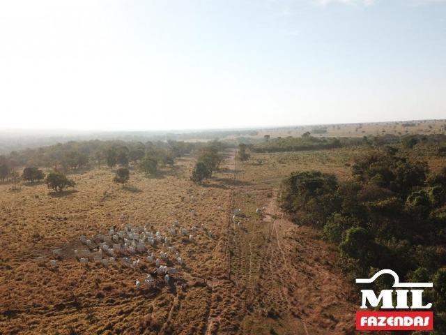 4 km de margens do Rio Araguaia. Fazenda 96 alqueires 464.64 Hectares - Aragarças-GO - Foto 4