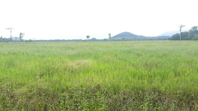 Fazenda Plana em Itapoá, Criação de Gado ou Plantio, Aceita Parte em Permuta - Foto 13